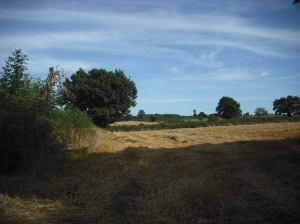 rows of straw on the stubble - dusty brown in the shade under a wispy sky