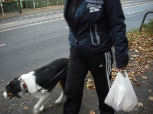 lovely tri-colour border collie seen on Grabbeallee