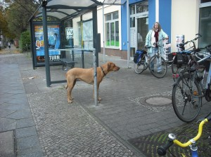 Standing patiently outside the Bäckerei without a lead at all.  He was there for some time, solid as a rock.