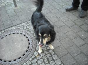 little dog at the Backerei