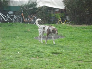 stalking away - having checked out the other dog.  Owners were picnicking nearby.