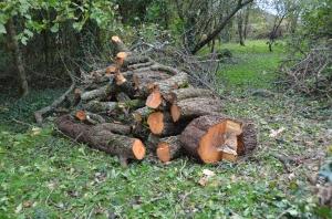 firewood?  Needs to season first.